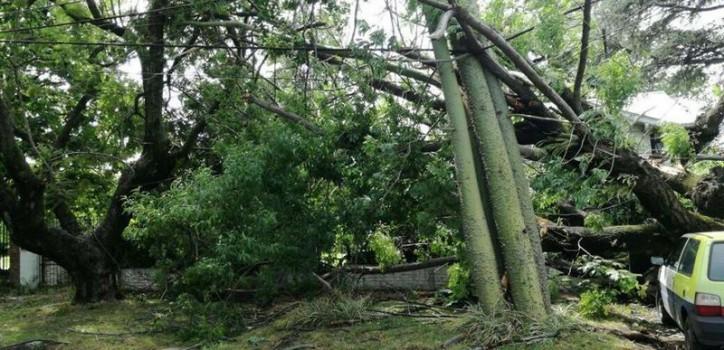 El temporal del sábado 16 ocasionó serios destrozos en Ciudad Jardín, Tres de Febrero, donde además de pérdidas materiales hubo interrupción de varios servicios.