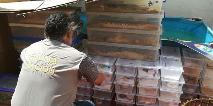 La Policía Federal incautó más de 200  serpientes en un departamento de Once.